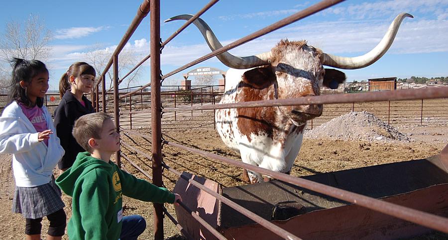 kids longhorn